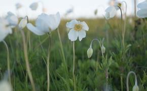 Picture field, flowers, plants