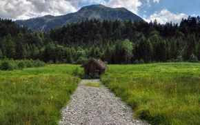 Picture field, forest, summer, grass, mountains, nature, hut, track, summer, forest, Nature, mountain, path