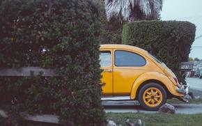 Picture machine, street, Bush, yard