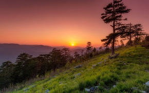 Picture trees, sunset, mountains