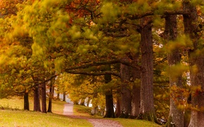 Picture autumn, nature, Park