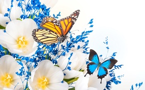 Picture flowers, collage, butterfly, wings, petals, tulips