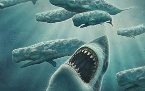 Picture figure, kit, Shark