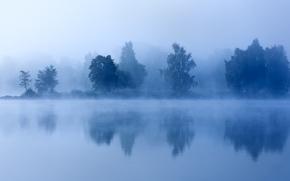 Picture trees, fog, lake, morning, twilight