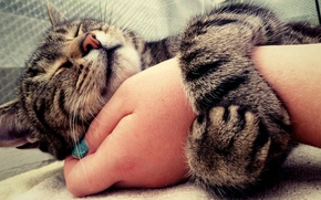 Picture mood, Cat, hug, animal, hand, cute, embrace, nose, eyes closed, muzzle, tender, painted nails, whiskers