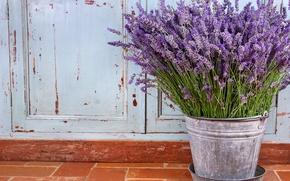 Picture flowers, still life, lavender, purple flowers