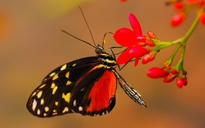 Picture flower, butterfly, plant, insect