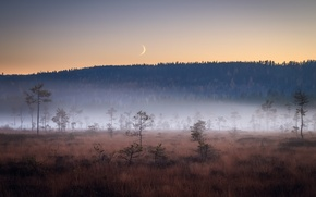 Picture field, night, fog, the moon