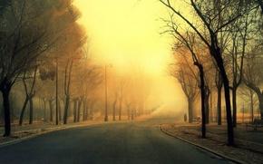 Picture fog, road, Park