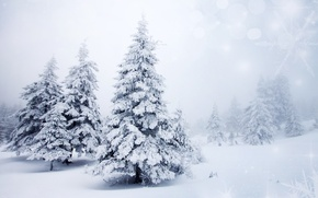 Picture winter, snow, trees, landscape, snowflakes, nature, background, tree, ate, tree, bokeh