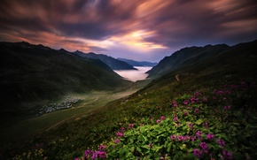 Picture flowers, mountains, the slopes, valley