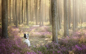 Picture forest, look, each, dog