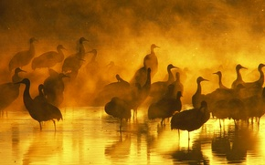 Picture water, sunset, birds, fog, the evening