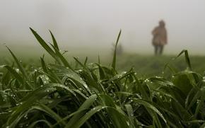 Picture greens, summer, grass, drops, nature, fog, rain, foliage, people in Dali