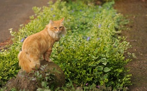 Picture grass, cat, flowers, stone, red