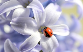 Picture flower, nature, ladybug, petals, insect