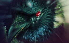 Picture eyes, Raven, Naruto, Naruto, art, Sharingan, tsxworld