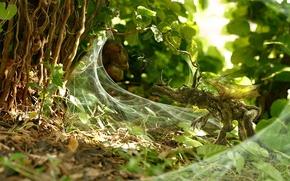 Wallpaper Plant, disguise, web