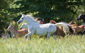 Picture summer, grass, horses, horse, meadow, the herd, (с) Oliver Seitz