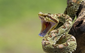 Picture eye, branch, snakes, mouth, reptile