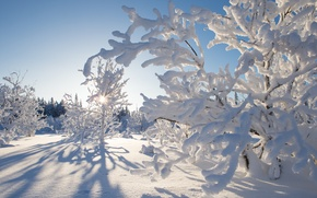 Picture winter, snow, trees, Canada, Canada, Northwest Territories, Northwest territories, Kakisa, Kakisa