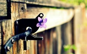 Picture flower, purple, macro, background, castle, widescreen, Wallpaper, the fence, blur, gate, wallpaper, widescreen, background, full …