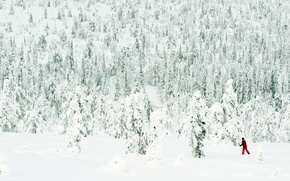 Picture FOREST, WHITE, SKIER, SNOW, WINTER, NEEDLES, RED, TREES, COSTUME, Had POWDER, SKI, STICK