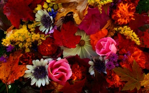 Picture autumn, leaves, bouquet, petals, still life