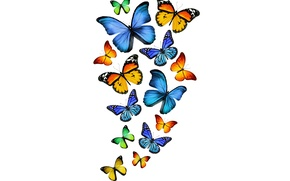 Picture butterfly, green, yellow, green, blue, yellow, blue, butterflies