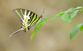Picture leaves, butterfly, wings, branch, antennae, web, proboscis