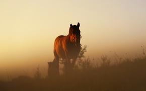 Picture grass, twilight, sunset, hill, horses, dusk, vegetation