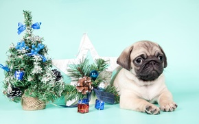 Picture tree, pug, puppy, New year