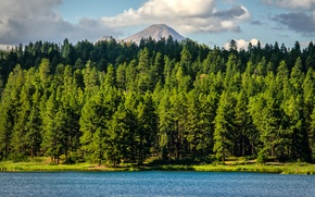Picture forest, trees, lake, mountain, Colorado