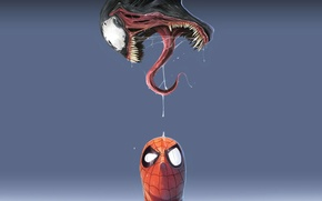 Wallpaper spider-man, blue background, Venom