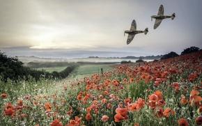 Wallpaper field, Maki, aircraft