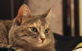 Picture Cat, Cats, Animals