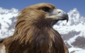 Picture mountains, bird, eagle