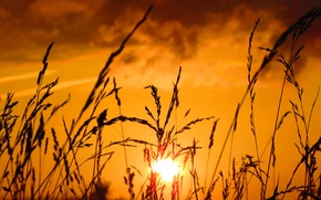 Picture the sky, sunset, spikelets