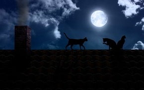 Picture roof, cats, night, darkness, the moon, pipe, the full moon, black