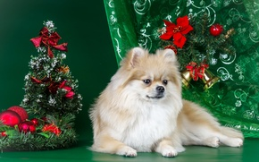 Picture decoration, tree, new year, Spitz