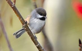 Wallpaper branch, bird
