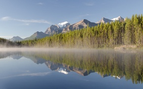 Picture forest, mountains, fog, river