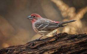 Picture bird, paint, beak, tail, reel