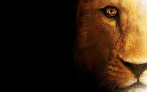 Picture cat, predator, Leo, beast