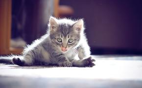 Picture eyes, mustache, kitty, cute, photographer ann_ann