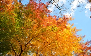 Picture autumn, the sky, leaves, trees
