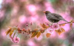 Picture bird, branch, spring, flowering