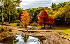 Picture Nature, Bridge, Autumn, Trees, River, Park, Uruguay, Minas, Lavalleja