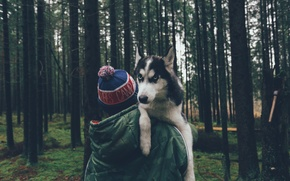 Picture forest, trees, hat, dog, guy, husky