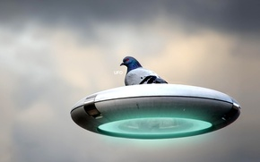 Picture UFO, Dove, Plate